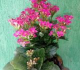 Plantas Naturalez