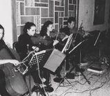 Violines Praga de Guatenala